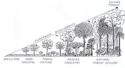 guayapi-analog-forestry