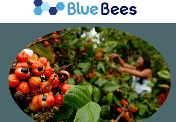 corps texte bluebees site