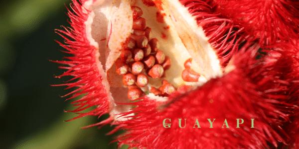 Urucum Guayapi logo